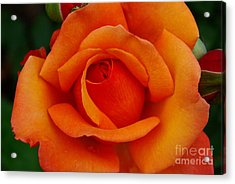 Acrylic Print featuring the photograph Detail In Orange by John S