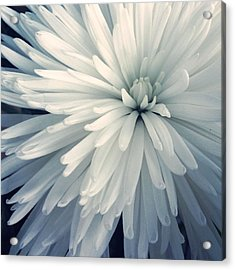 Detail Shot Of Cropped White Flower Acrylic Print by Valerie Locante / Eyeem