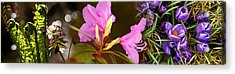 Details Of Early Spring Flowers Acrylic Print by Panoramic Images
