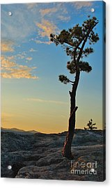 Determined Acrylic Print by Paul Noble