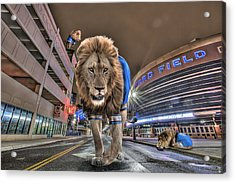 Detroit Lions At Ford Field Acrylic Print by Nicholas  Grunas