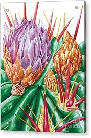 Devil's Tongue Cactus Flower Acrylic Print