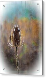 Dew And Thistle Acrylic Print