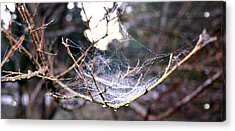 Dew Covered Spiderweb Acrylic Print by Julie Cameron