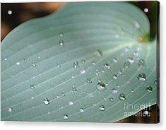 Dew Diamonds On Hosta Acrylic Print