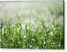 Dew Drenched Morning Acrylic Print