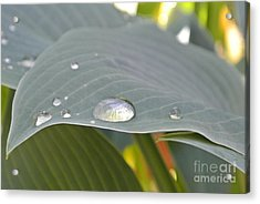 Dew Droplets Acrylic Print