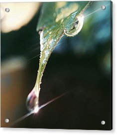 Acrylic Print featuring the photograph Dew Drops by Nikki McInnes