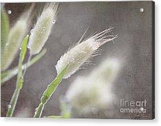 Dew Kissed Morning Acrylic Print by Linda Lees