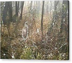 Dew Kissed Web Acrylic Print by Chasity Johnson