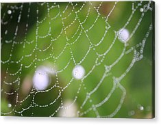 Dew On A Web  Acrylic Print