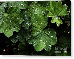 Acrylic Print featuring the photograph Dew On Leaves by Tom Brickhouse