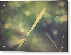 Dew Acrylic Print by Taylan Apukovska