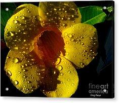 Dew Trumpet Acrylic Print by Greg Patzer