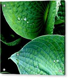 Dew Acrylic Print by Valerie Fuqua