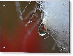 Dewdrop Lily On Milkweed Silk Acrylic Print