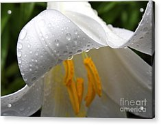 Dewdrops On Lilly  Acrylic Print by Jay Nodianos