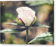 Dewy Bloom Acrylic Print