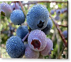 Dewy Blueberries Acrylic Print