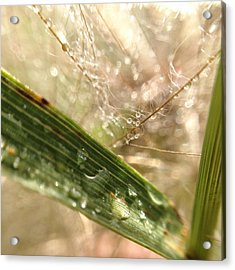 Acrylic Print featuring the photograph Dewy Dandelions by Nikki McInnes