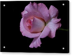 Acrylic Print featuring the photograph Dewy by Doug Norkum