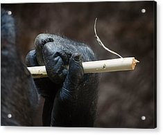 Acrylic Print featuring the photograph Dexterity by Rebecca Sherman