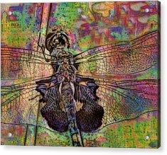 Dfly Acrylic Print by Jack Zulli