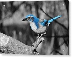 Dial Blue Acrylic Print
