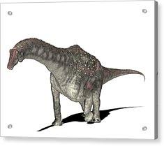 Diamantinasaurus Dinosaur Acrylic Print by Friedrich Saurer