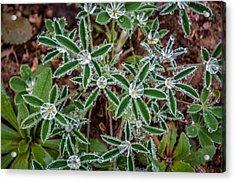 Diamond Flowers Acrylic Print by Kelly Kitchens