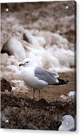 Diamond In The Rough  Acrylic Print by Penny Hunt