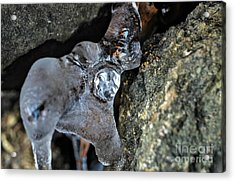 Diamond In The Ruff Ice Acrylic Print by Peggy Franz