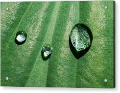 Diamonds Are Forever - Featured 3 Acrylic Print by Alexander Senin