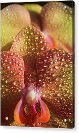 Diann's Orchids Acrylic Print