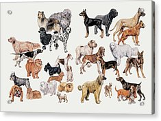 Different Breeds Of Dogs Acrylic Print by Deagostini/uig/science Photo Library