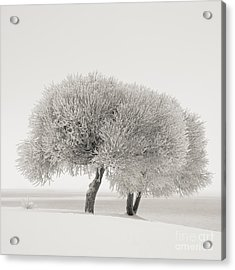 Different Season Acrylic Print