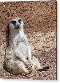 Digging Is Hard Work Acrylic Print by Margaret Saheed