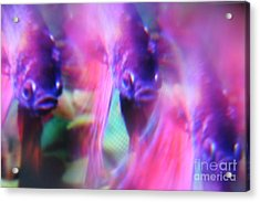 Digital Abstract With Fish 6 Acrylic Print