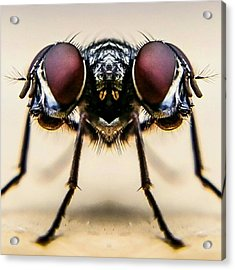 Digital Composite Image Of Housefly Acrylic Print by Chris Raven / Eyeem