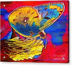Digital Mixed Media Butterfly Acrylic Print