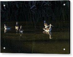 Digital Oil Of Sandpipers Acrylic Print