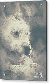 Digital Oil Painting Of A Cute Scruffy Dog  Acrylic Print