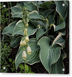 Acrylic Print featuring the photograph Digitalis by Leif Sohlman