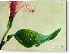 dim colours II Acrylic Print by Priska Wettstein