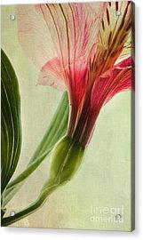 Dim Colours Acrylic Print by Priska Wettstein