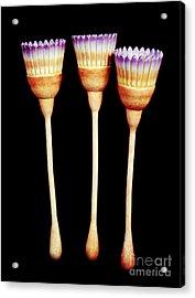 Dinomischus Isolatus Acrylic Print by Chase Studio