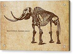 Dinosaur Mastodon Americanus Acrylic Print by Aged Pixel