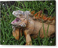Acrylic Print featuring the photograph Dinosaur by Phil Abrams