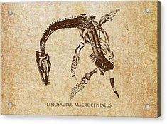 Dinosaur Plesiosaurus Macrocephalus Acrylic Print by Aged Pixel