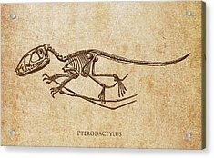Dinosaur Pterodactylus Acrylic Print by Aged Pixel